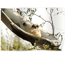 Cute Furry Owl  Poster
