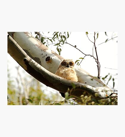 Cute Furry Owl  Photographic Print
