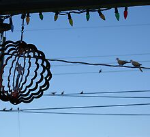 Birds on a wire by Shinrai