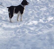 dog in snow by sianteri
