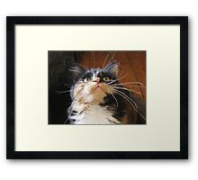 Cats Whiskers Framed Print