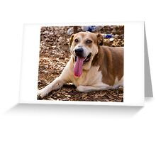 My Dog Named Precious Greeting Card