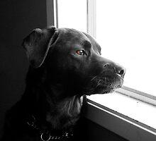 Lola waiting by bluemtnblues