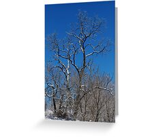 Loan Tree Greeting Card