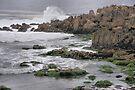 Wild Seal at Monterey Bay by Jo Nijenhuis