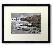 Wild Seal at Monterey Bay Framed Print
