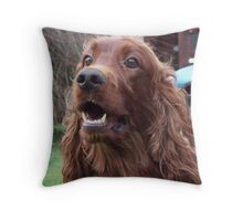 red setter close up Throw Pillow