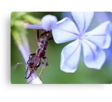 Fun on a Flower Canvas Print