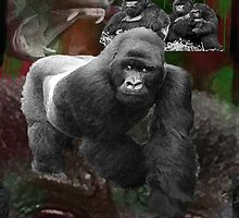 Endangered Gorillas Justin Beck Picture 2015094 by Justin Beck