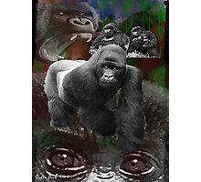 Endangered Gorillas Justin Beck Picture 2015094 Photographic Print