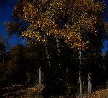 Island of trees by photoclimber