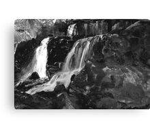 NATURE WITHOUT COLOR Canvas Print