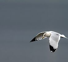 What's A Gull Like You . . . by Jay Ryser