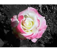Rose :: Colorized Photographic Print