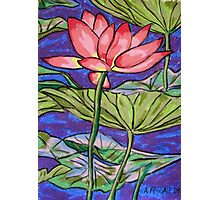 Lily/Lotus - in oil pastel Photographic Print