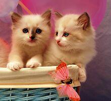 So sweet! by Patricia F. de Landa