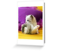 Paws!! Greeting Card