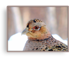 The face of beauty  Canvas Print