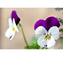 Viola Photographic Print