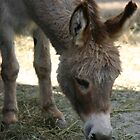 Hungry Burro by Alyce Taylor