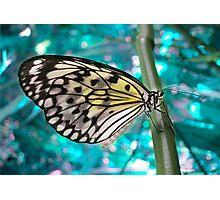 Paper Kite Photographic Print