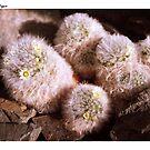Tiny Flowers, Prickley Fingers by SirDidymus