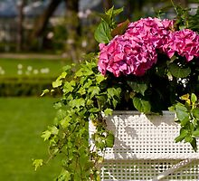 Hedera Helix ivy and Hydrangea by Arletta Cwalina