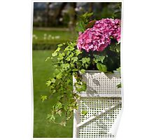 Hydrangea or hortensia blooming Poster