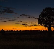 Queensland Bottle Tree at Sunset by Steve Bass