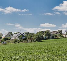 Maize Field, Beganne, Brittany, France #2 by Elaine Teague
