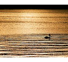 Golden Whisper Photographic Print