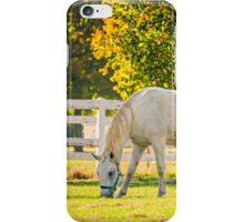 Slovenia, Lipica, Lipizzan Horse iPhone Case/Skin