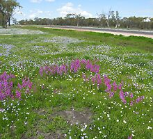 Bluebells and pea flowers on the roadside, Dalby, Qld. Australia by Marilyn Baldey