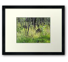Morning Visitors  Framed Print