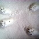 Paw Prints in the Snow by Tori Snow