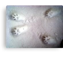 Paw Prints in the Snow Canvas Print
