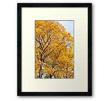Yellow leaves autumn trees Framed Print