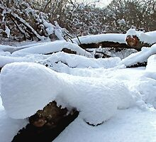 Snow Logs by Colin  Williams Photography