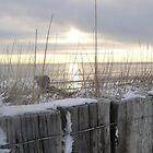 Snowy Sunrise by nikki harrison