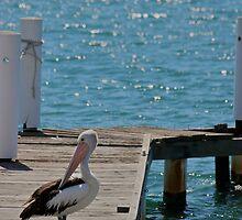 Pelican Wharf by danielhardinge