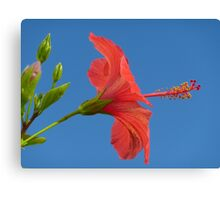 Blue Sky And Hibiscus Canvas Print