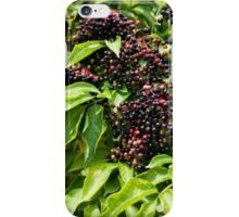 Elderberry fruits fresh clusters iPhone Case/Skin
