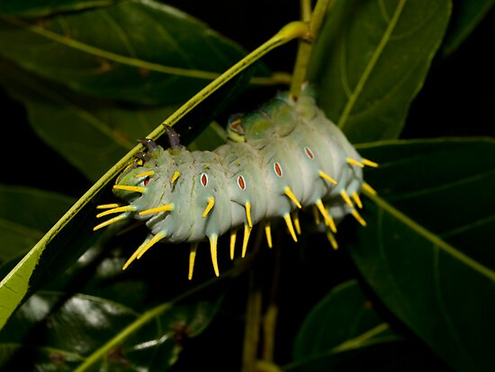 The Hercules Caterpillar  I by Paul Davis