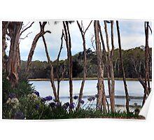 The River - Blackwall, Tasmania Poster