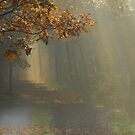 Going on an enchanted path by jchanders