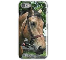 Clydesdale Cross iPhone Case/Skin