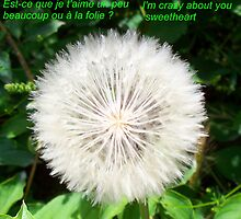 I love you by daffodil