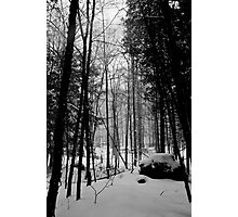 Woodland in Winter Photographic Print