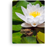 White Water Lily with Frog Canvas Print