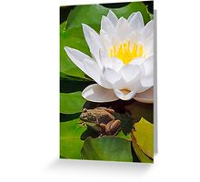 White Water Lily with Frog Greeting Card